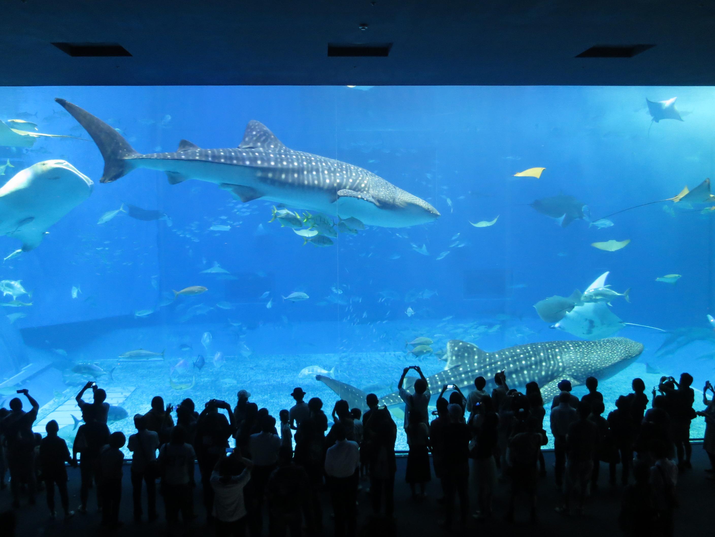 200214 美ら海水族館