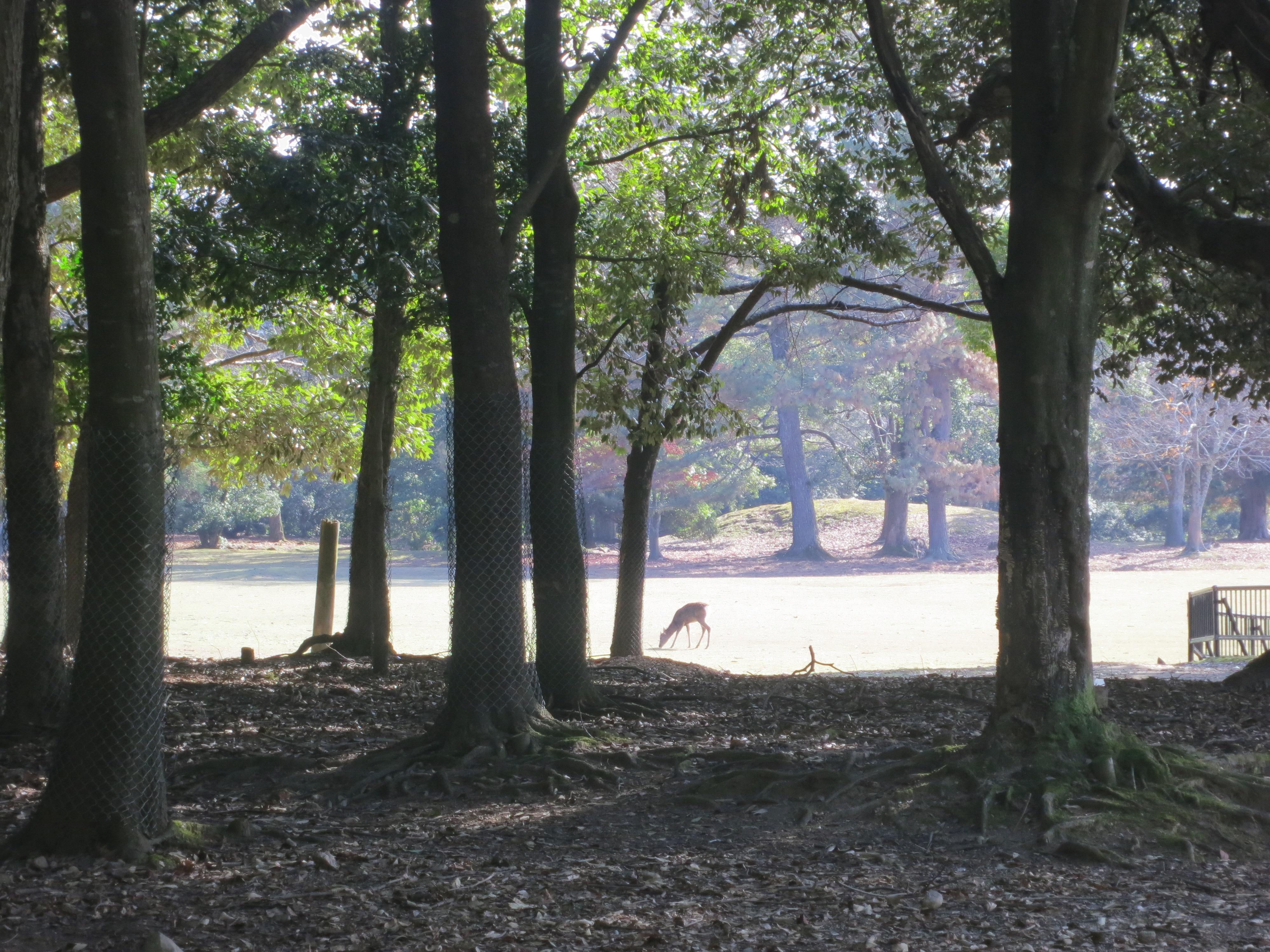 201203 奈良公園の鹿
