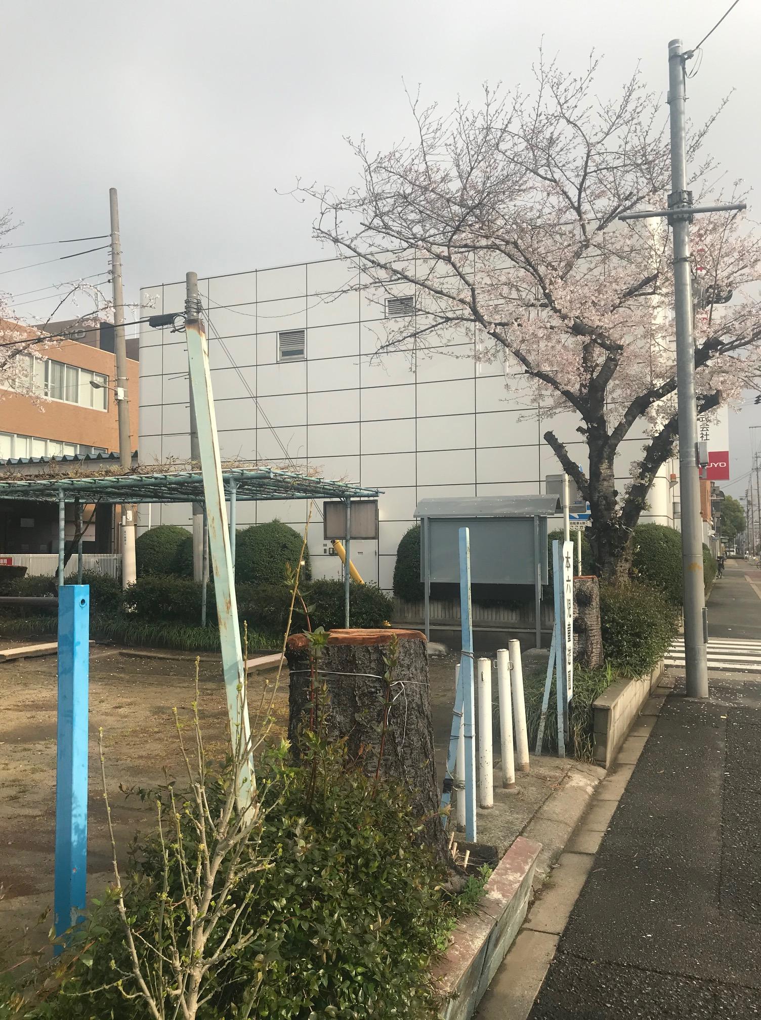 210330 本六公園の桜