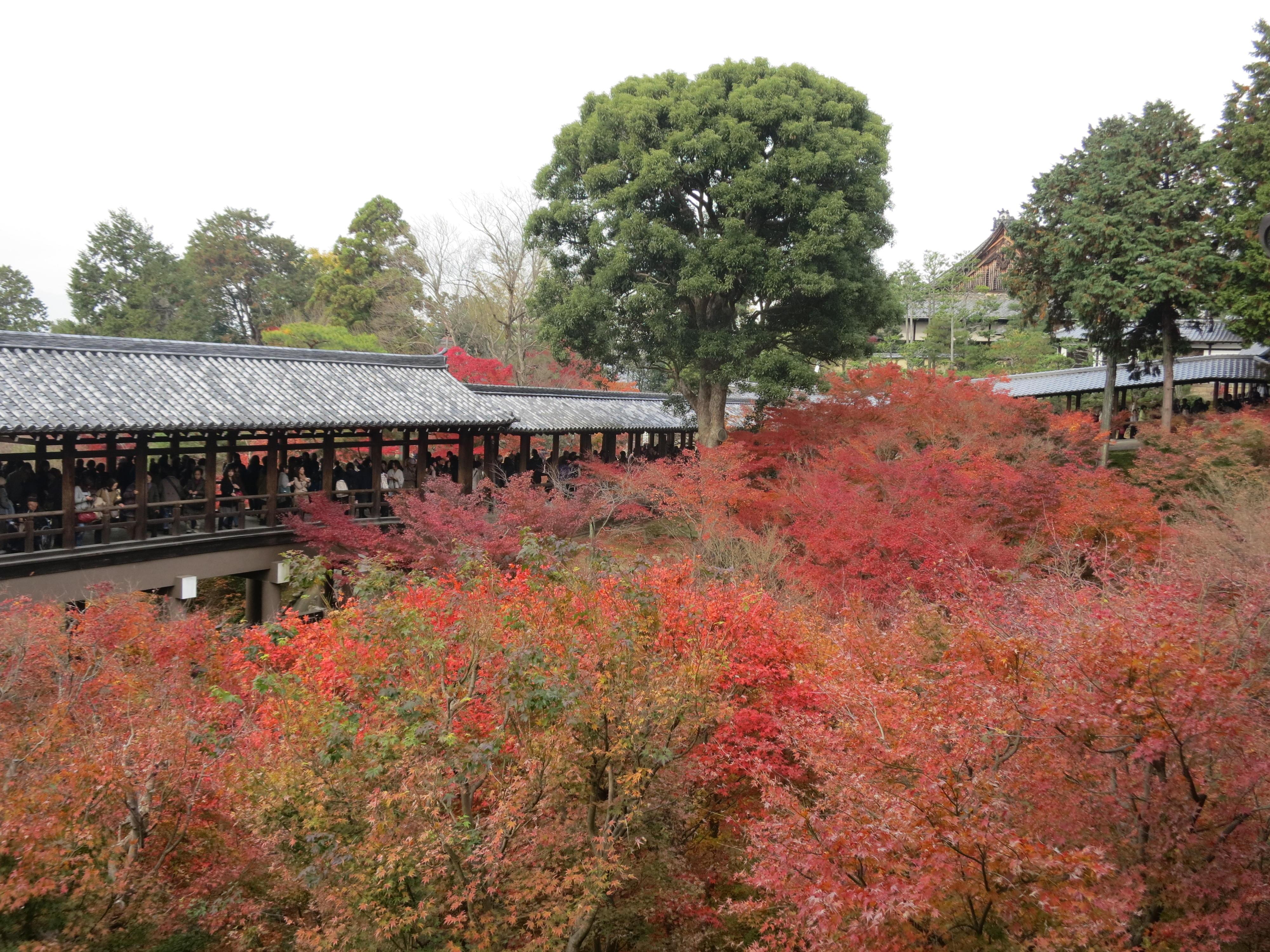 211026 京都 東福寺 通天橋